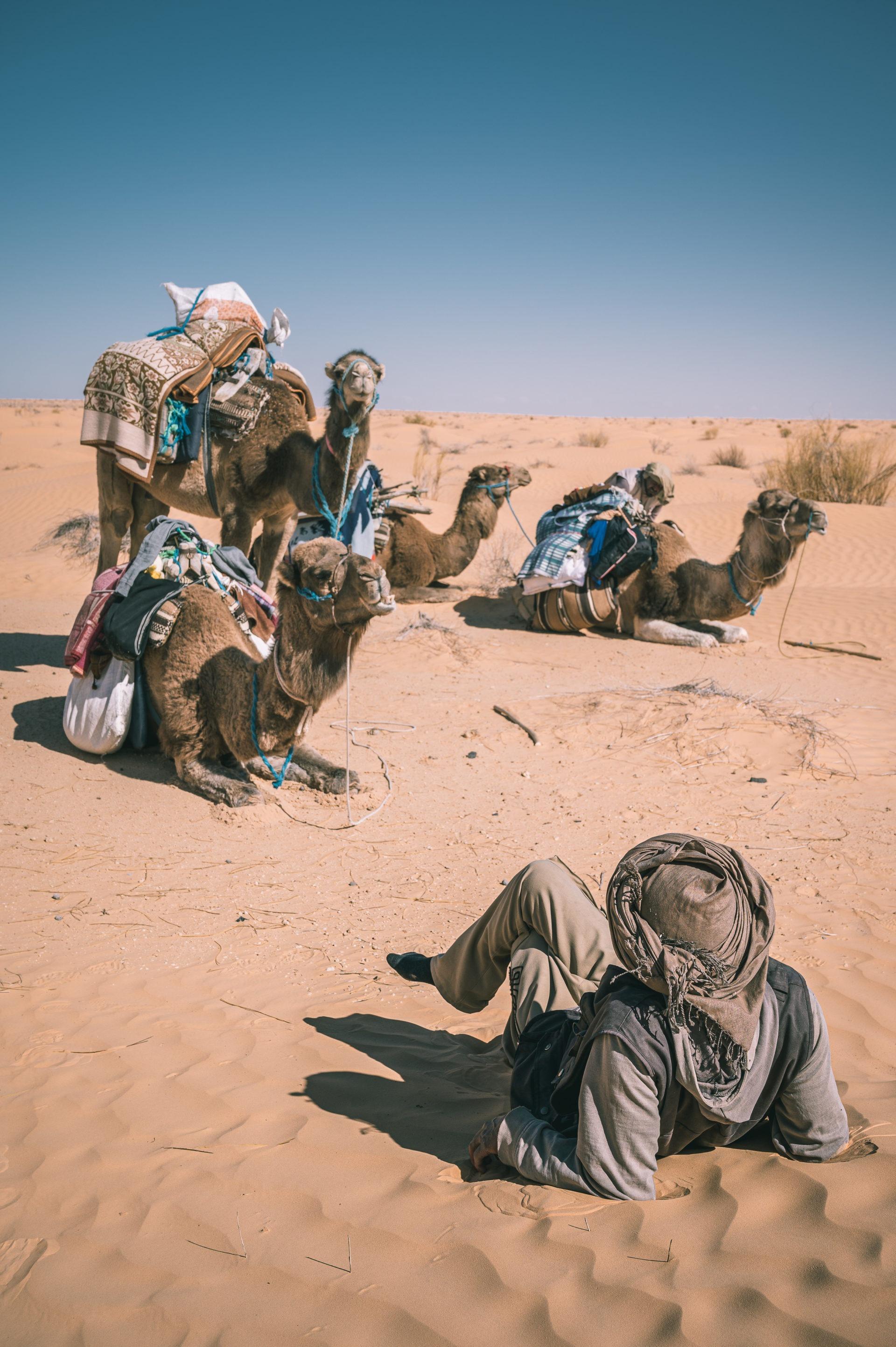 désert Tunisie dromadaire