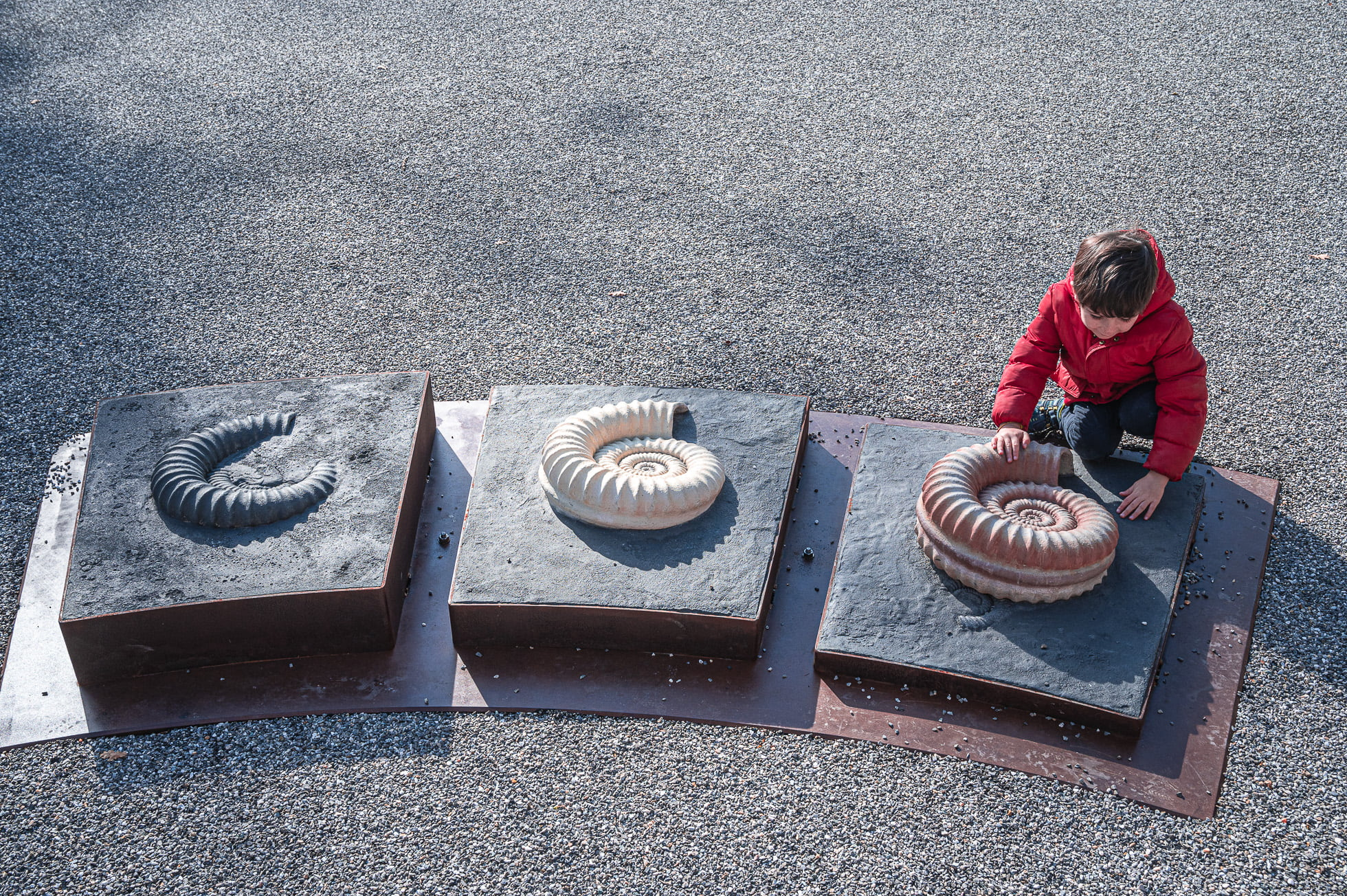 dalle aux ammonites alpes de haute provence