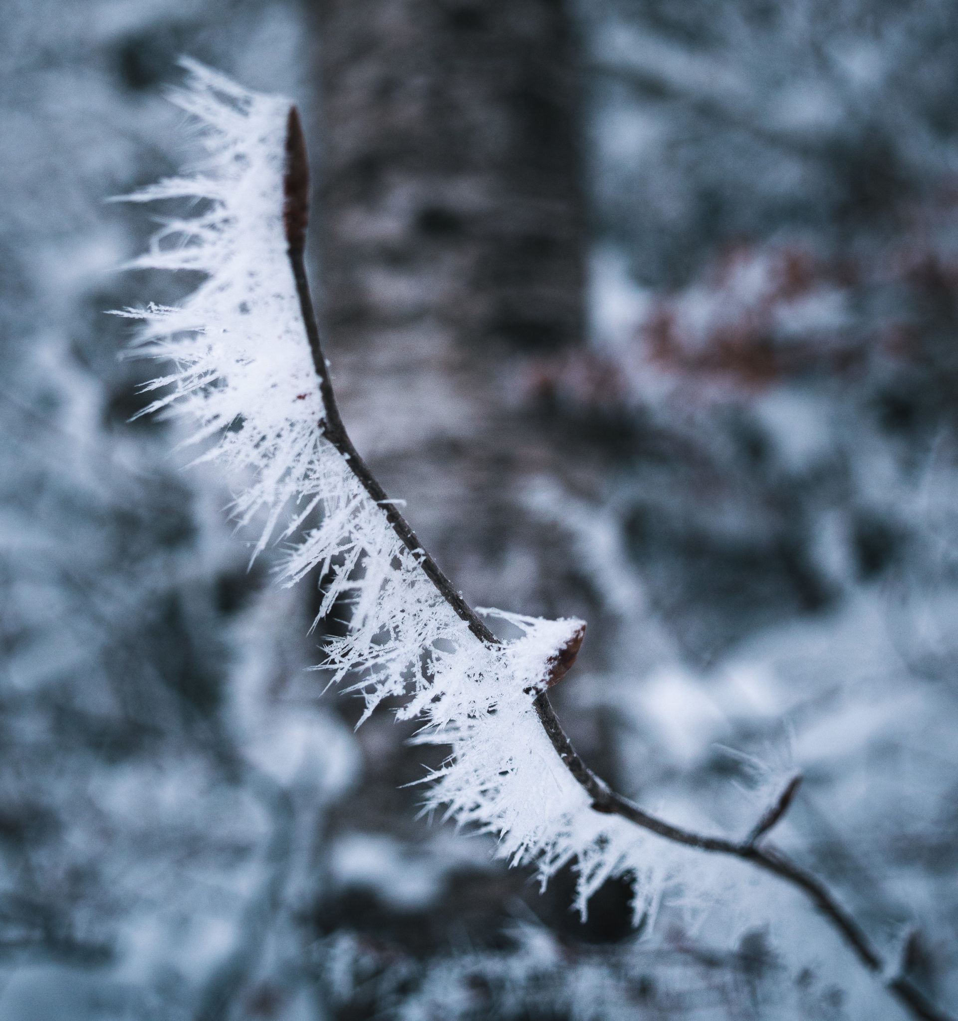 randonnée vercors hiver foret