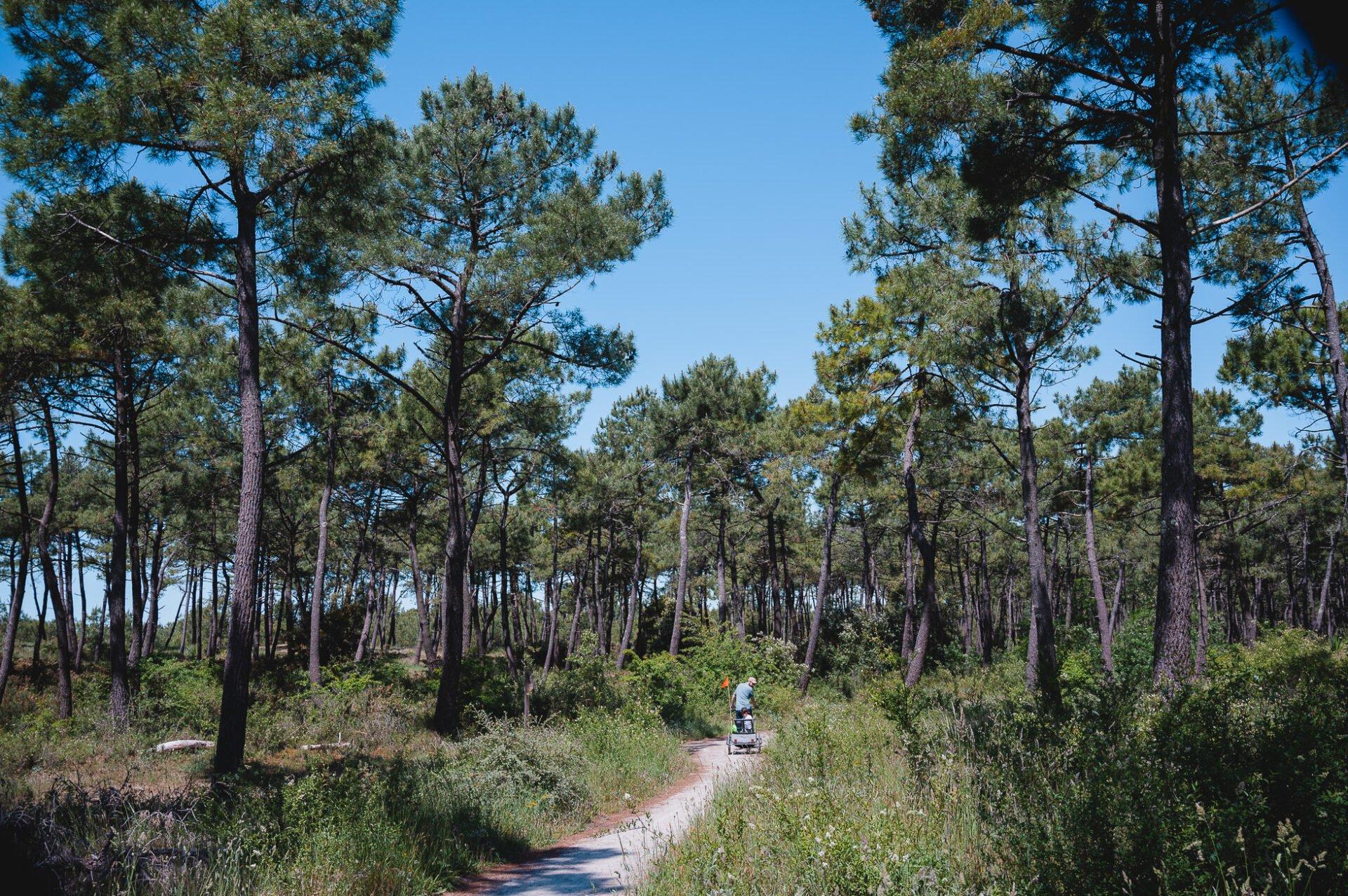 marais poitevin 8684 - Les globe blogueurs - blog voyage nature
